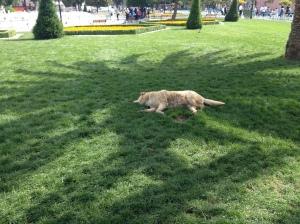 Hunde in Istanbul